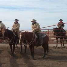 Pen riders use horses to work cattle