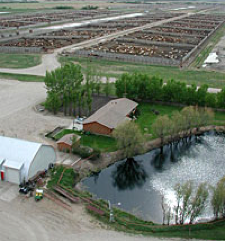 Feedlot Overview